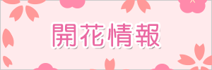 JR奈良線桜開花情報
