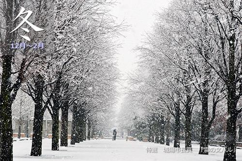 JR奈良線冬