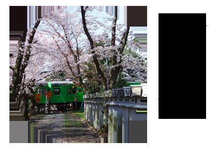 春の季節の写真